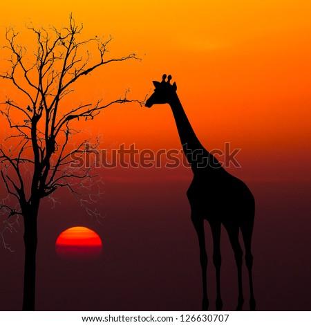 Giraffe Silhouette Silhouettes of Giraffes And