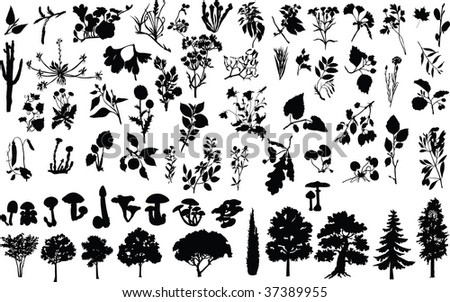 silhouettes of herbs, trees, bushes, flowers, and mushrooms