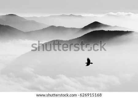 Silhouettes of mountains in the mist and bird flying #626915168