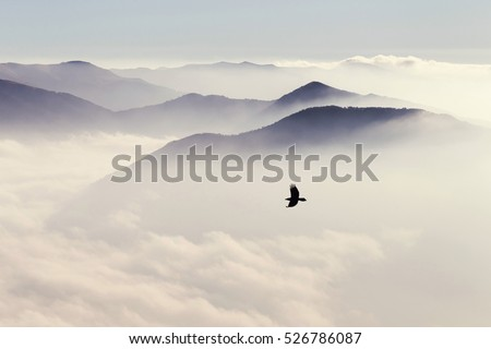 Silhouettes of mountains in the mist and bird flying in warm toning #526786087