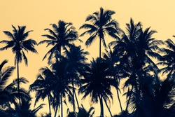 Silhouettes of palm trees at dawn light in tropics