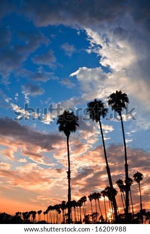 Silhouettes of palm trees at sunset in Santa Barbara, California.
