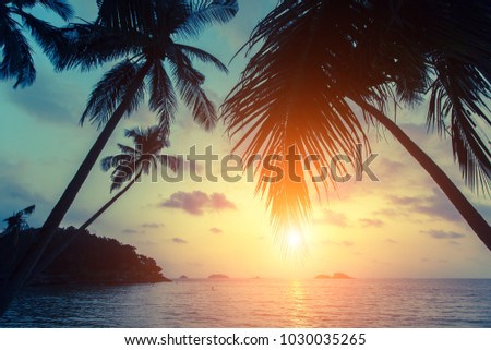 Silhouettes of palm trees on the tropical sea beach at sunset.