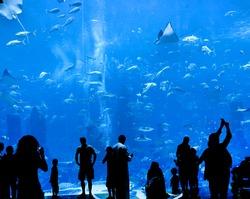 silhouettes of people against a big aquarium