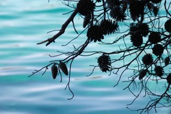 Silhouettes of pine cones above the turquoise sea surface.
