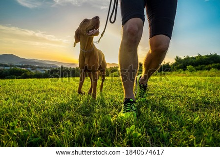 Silhouettes of runner and dog on field under golden sunset sky in evening time. Outdoor running. Athletic young man with his dog are running in nature.