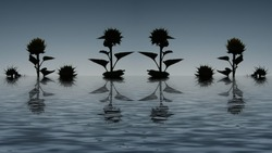 Silhouettes of sunflowers standing in water (creative artwork)