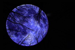 Silhouettes of tree branches on the background of the mystical blue moon. Background for halloween.