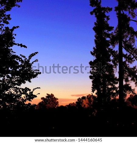 Silhouettes of trees against the twilight sky, twilight in the forest, square background #1444160645
