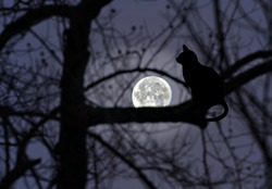 Silhouettes of trees, and a cat with the full moon glowing in the distance.