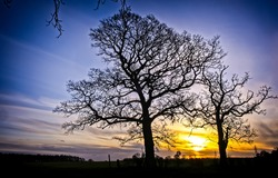 Silhouettes of trees at dawn. Silhouetted trees at dawn. Dawn trees. Trees at dawn