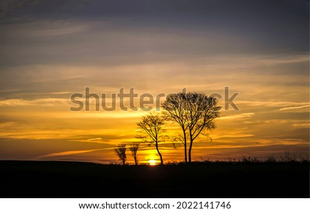 Silhouettes of trees at sunset. Sunset tree silgouettes. Trees at sunset. Sunset sky view