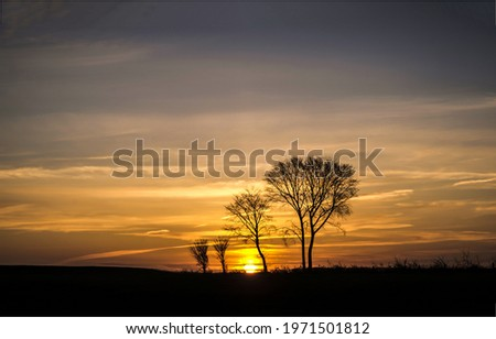 Silhouettes of trees at sunset. Sunset tree silhouette. Sunset sky landscape. Tree sunset silhouettes