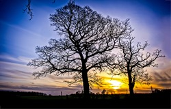 Silhouettes of trees at sunset. Sunset trees silhouettes. Sunset tree view. Trees at sunset