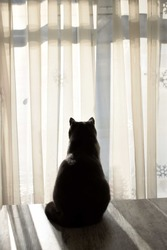 silhoutte of a cat looking outside a window