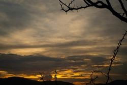 silhuette dark thorn branch frame on yellow and  dark white cloud sunset  sky ,for  background
