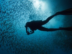 Silhuette of a diver swimming in a school of fish and the sun in the background