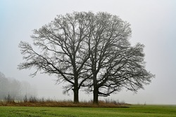 silhuette of tree in agriculture fields and mist