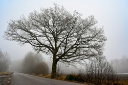 silhuette of tree near road a misty morning