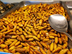 Silkworm chrysalis Fried is a high protein food. Close-up Oily taste and salty silkworms. Insect food, worm insect for eating. It is Vietnamese street food delicious strange concept sale in supermarke