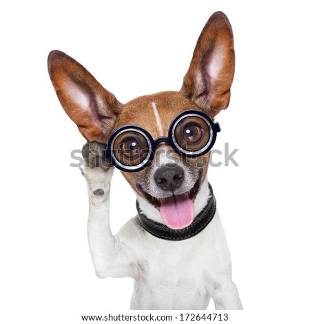 silly dog listening  careful with one very big ear - stock photo