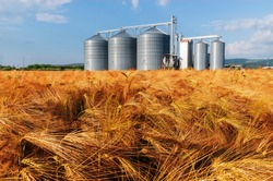 Silos in a barley field. Storage of agricultural production.
