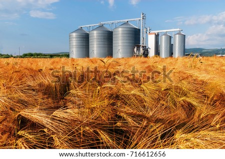 Silos in a barley field. Storage of agricultural production. #716612656