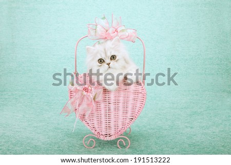 Silver Chinchilla kitten sitting inside pink heart shaped basket decorated with pink bows on light green background