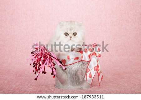 Silver Chinchilla kitten sitting inside silver watering can with heart printed ribbon bow and pink red hearts pouring out of spout, on pink background