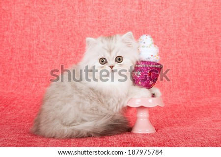 Silver Chinchilla kitten with faux cupcake parfait on pink cupcake stand on bright pink background
