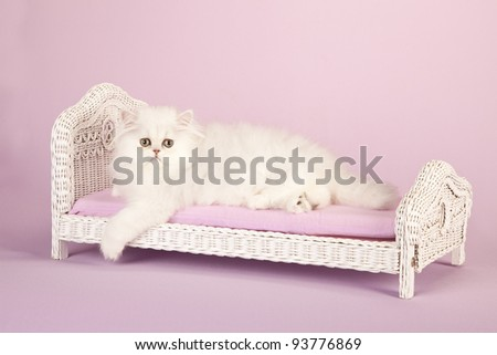 Silver Chinchilla Persian kitten on miniature white wicker bed on lavender background