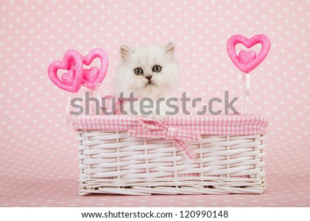 Silver Chinchilla Persian kitten sitting inside white wicker basket with pink hearts on pink background