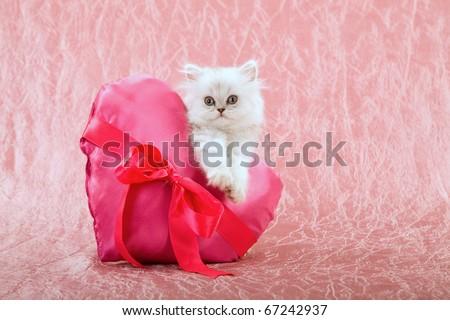 Silver Chinchilla Persian kitten with pink Valentine heart cushion