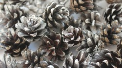 Silver Christmas Natural Cones Forest