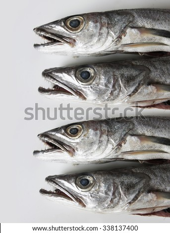 Silver fish with small pointy teeth stock photo 338137400 for Small silver fish