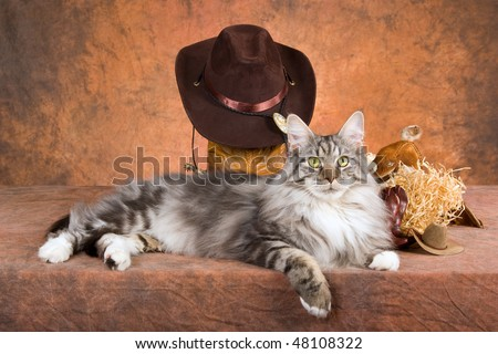 Silver Maine Coon with cowboy hat, spurs, saddle, on brown mottled background
