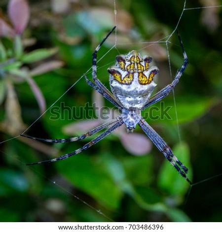 Silver orb spider #703486396