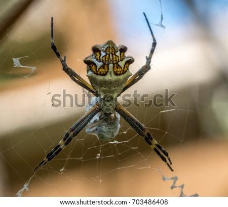 Silver orb spider #703486408