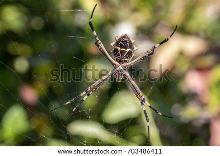 Silver orb spider #703486411