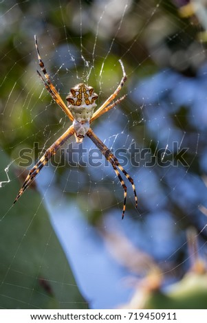 Silver orb spider on web #719450911