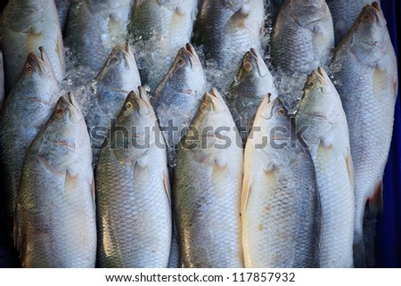 Silver perc  White perch fish fresh in the market - stock photo