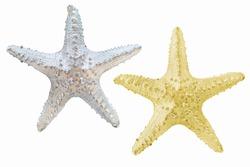 Silver starfish.Golden starfish.