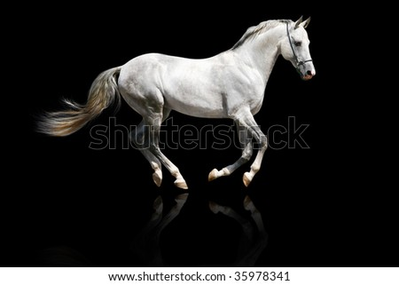 silver-white stallion galloping