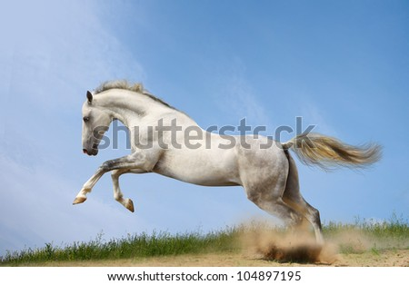 silver-white stallion in grass