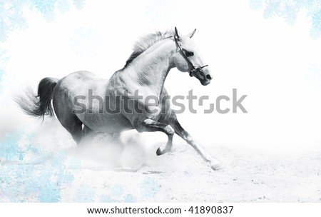 silver-white stallion in snow