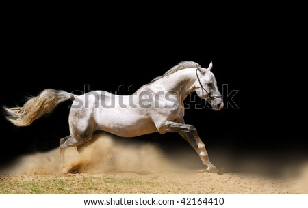 silver-white stallion moving fast in dust
