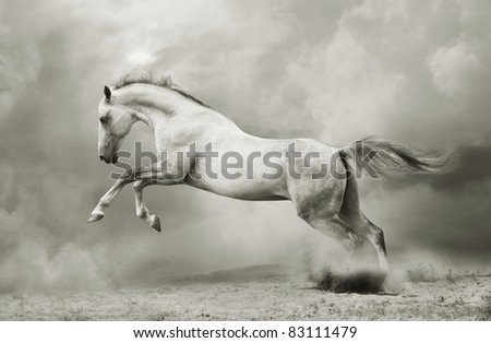 stock photo : silver-white stallion on black