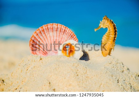 simbolic picture of one wedding ring whit seahorse and seashell in the sand