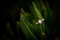 Simple and elegant oval diamond ring resting on a green plant in a succulent garden with six prongs. Dark black background to isolate the gemstone
