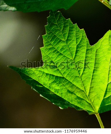 Simple beauty of a leaf #1176959446